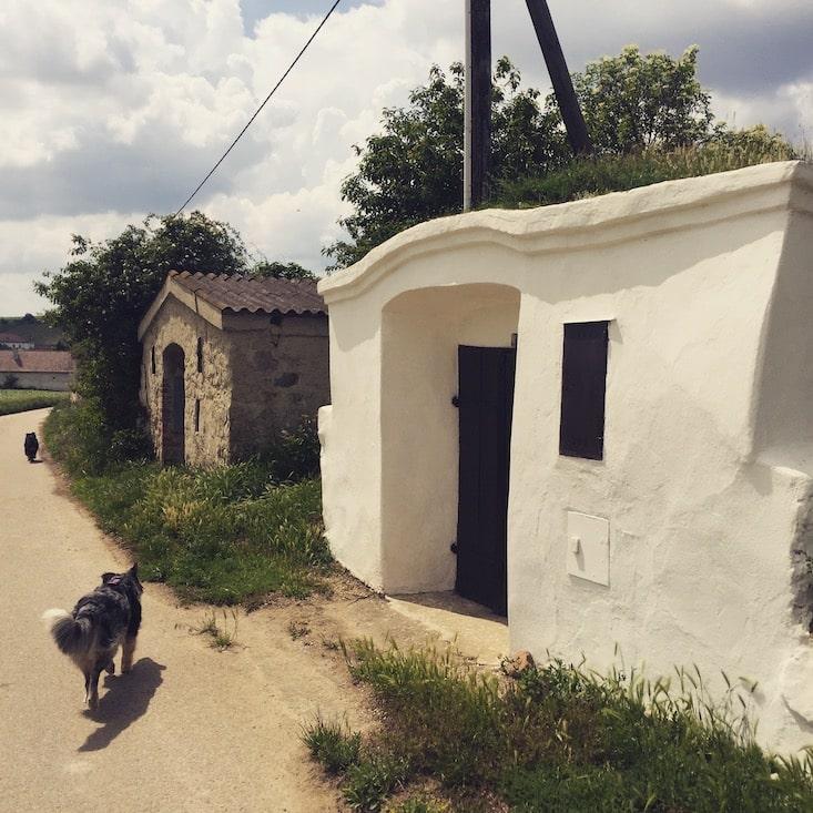 wandern mit Hund Camping Niederösterreich Retz