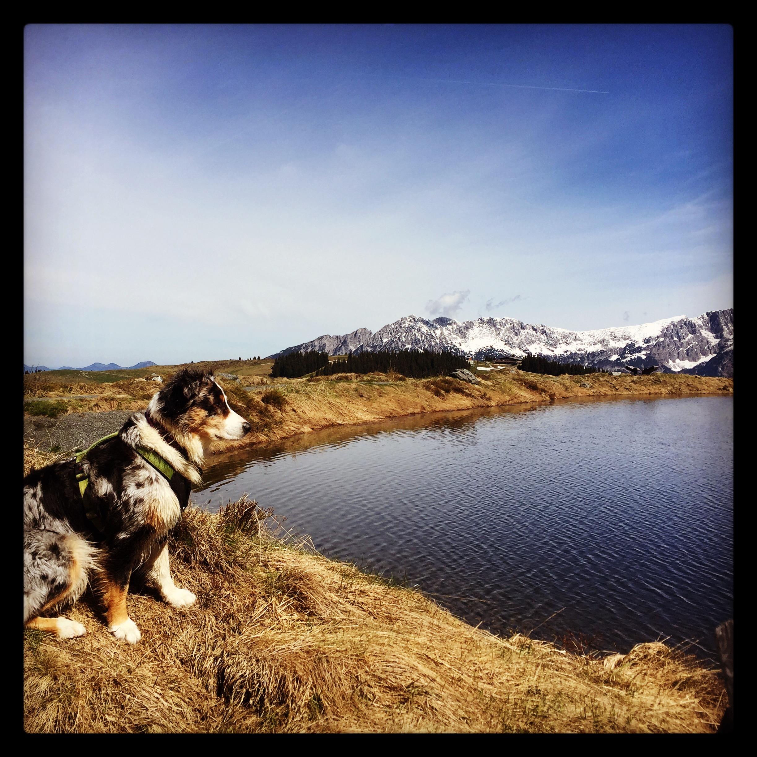 Chumani Wandern Hund Camping