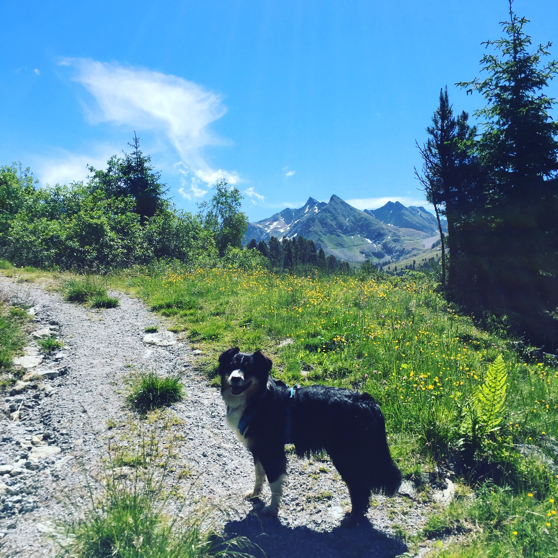 Wandern mit Hund Kühtai