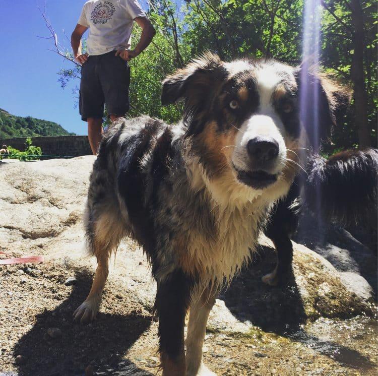 Drôme Camping Hund Wanderung