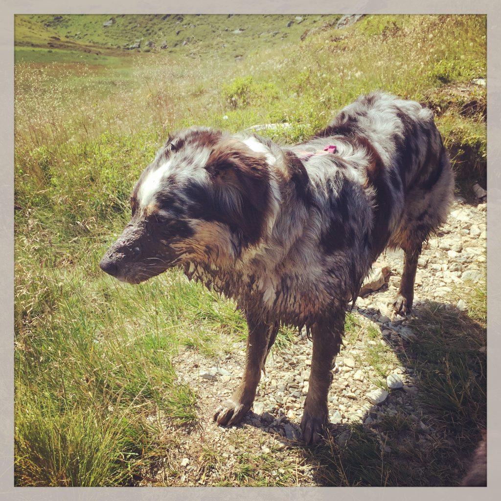 Hund Reise Wasseraufnahme