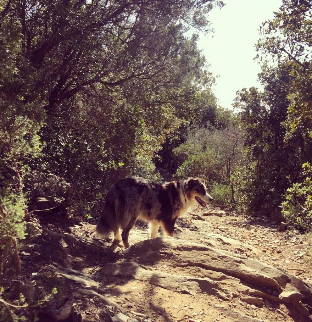 Toskana Hund camping wandern Maremma Piombino