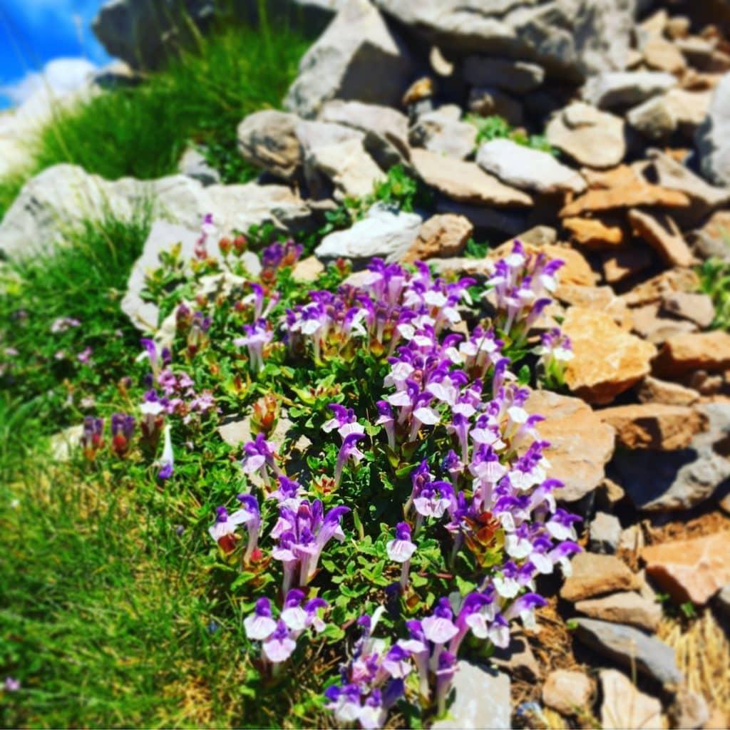 Blütenpracht im Valle de Hecho