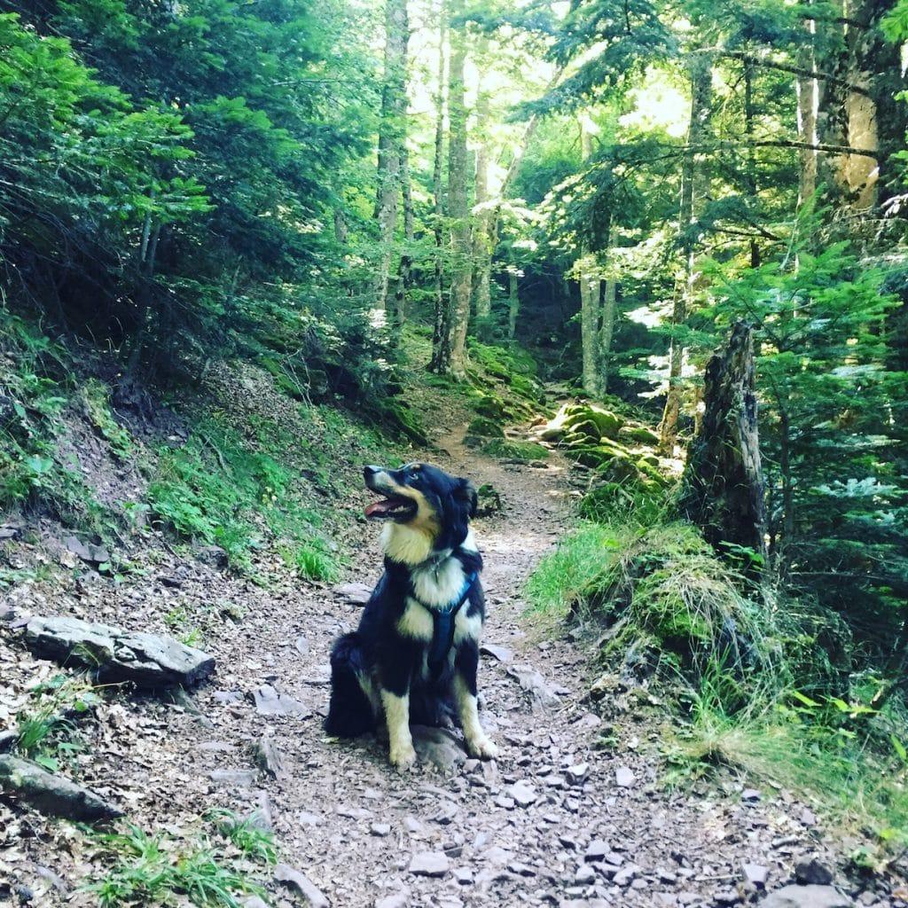 Castillo D'acher wandern Hund Hecho Tal Aragon Pyrenäen