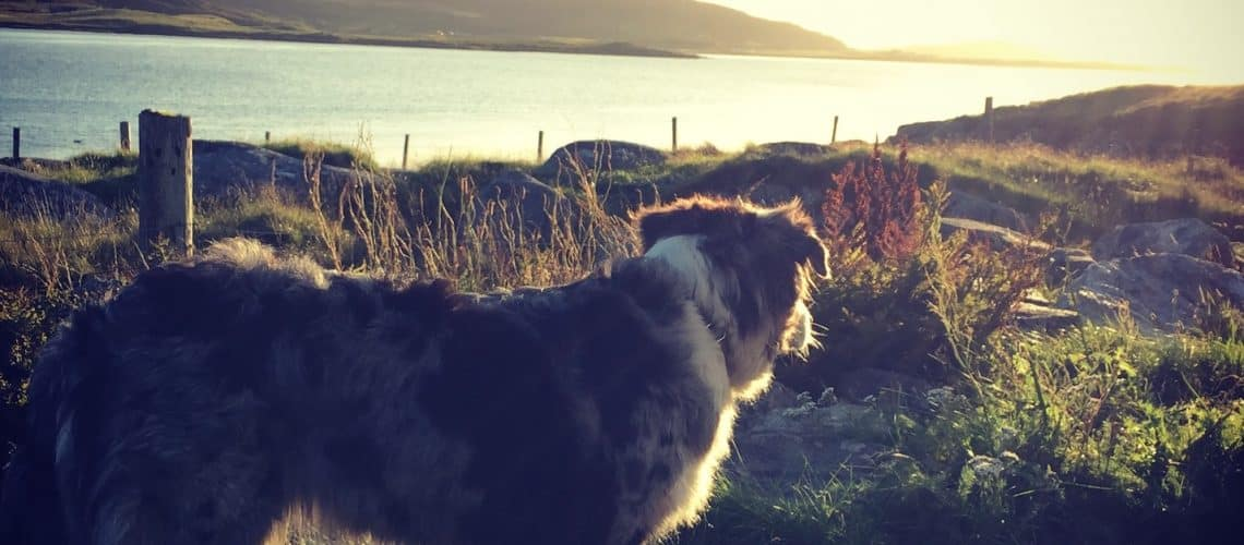 Lewis und Harris Hund Camping