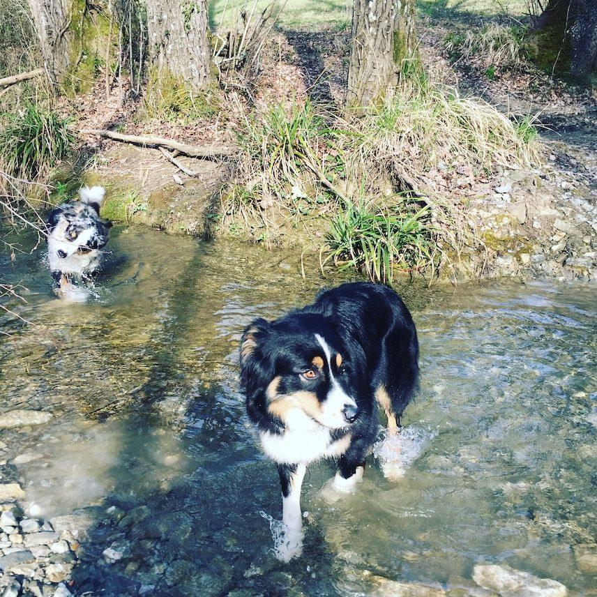 Umbrien Toskana Campingreise hund