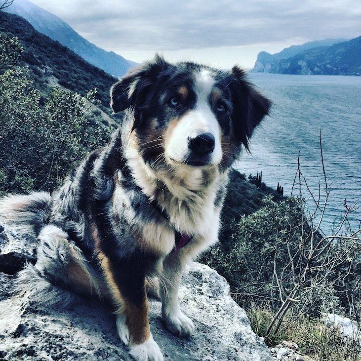 Gardasee Torbole Hund Wandern Camping Februar