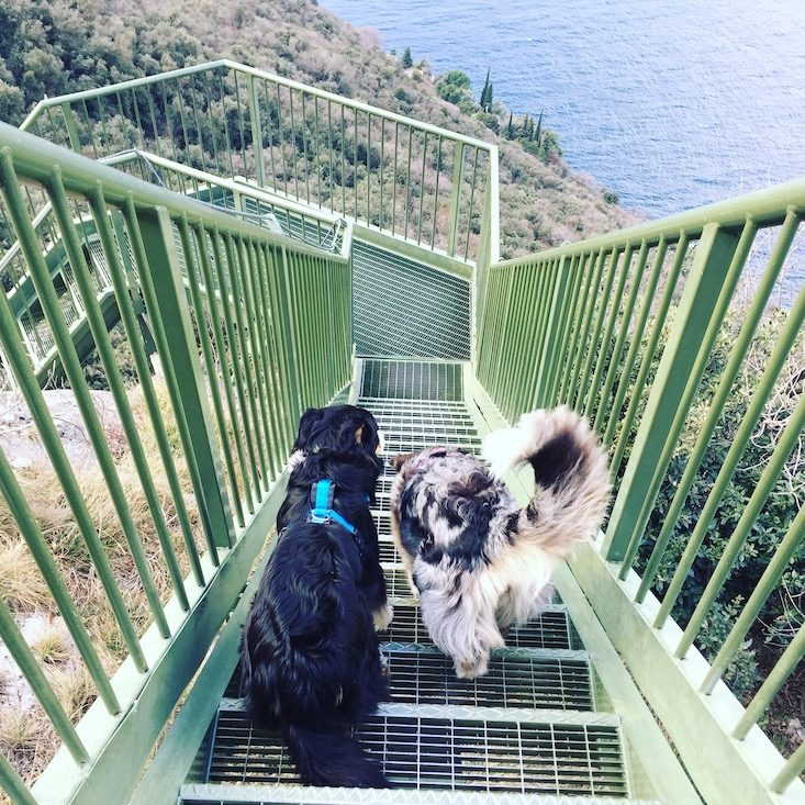 Gardasee Torbole Wandern Busatte Tempesta Hund Camping Februar