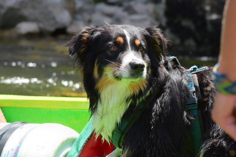 Ardèche Hund Kanu Bootstour Frankreich