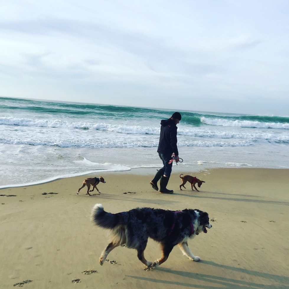 Hund camping Frankreich Aquitanien Atlantik