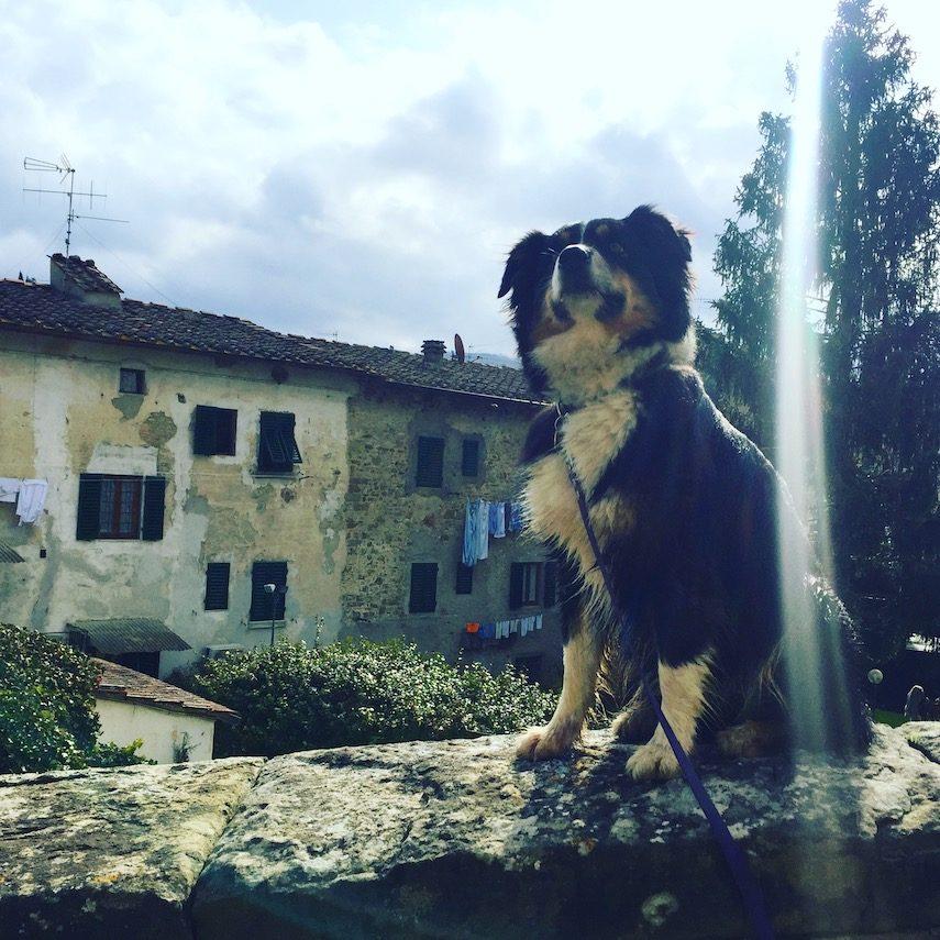umbrien toskana Greve hunde camping Wohnmobil Italien Wanderung