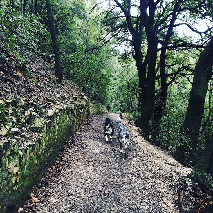 hunde Umbrien Italien wandern Wohnmobil