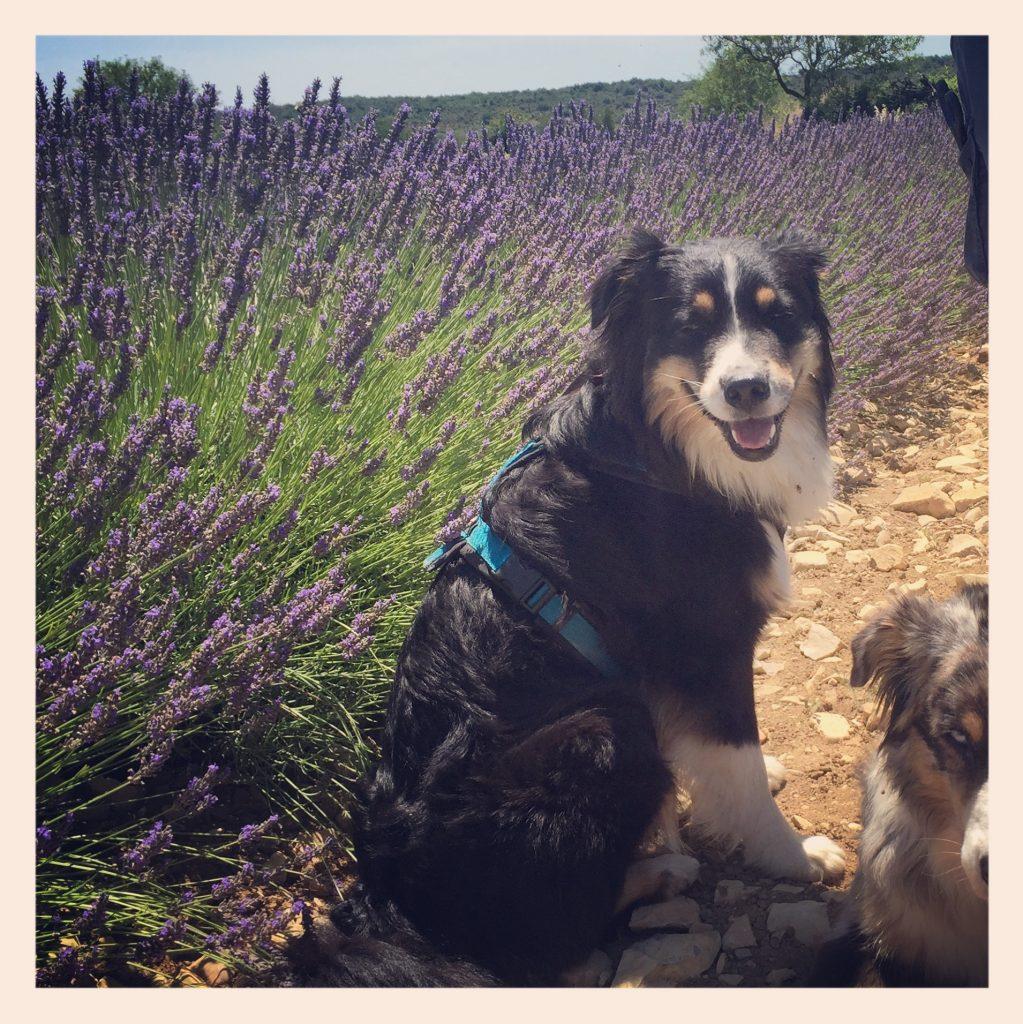 Ardèche Hunde Kanu Frankreich Camping Lavendel