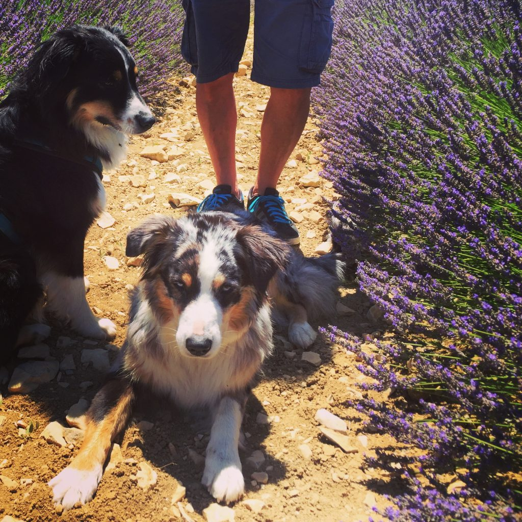 Ardèche Frankreich Südfrankreich Hund Hunde Camping Wohnmobil Kanu Tour