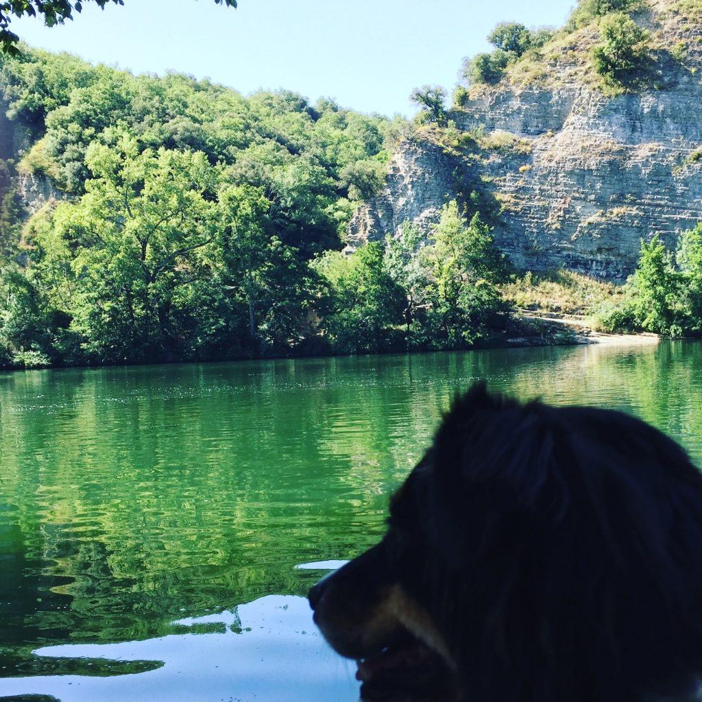 Ardèche Hunde Kanu Fluss Frankreich