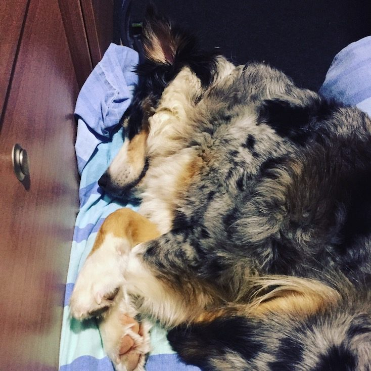 Kelchsau Schneeschuhe Hund Camper Wintercamping