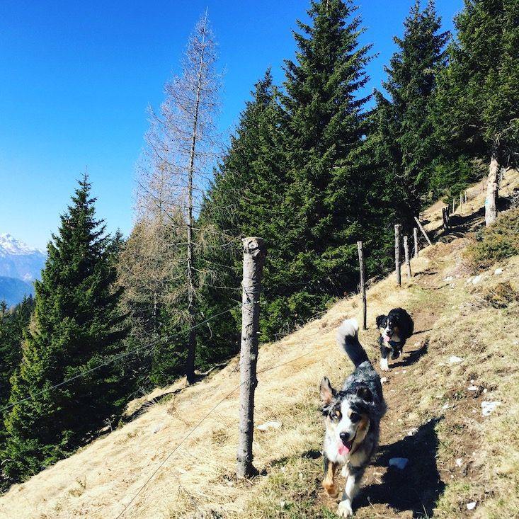 Passo Brecon Lagorai Monte Timoncello Trentino Camping Wohnmobil Hund Wandern