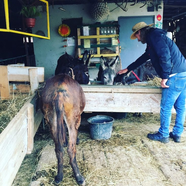 Eselfarm Eselsfarm Montenegro Wohnmobil