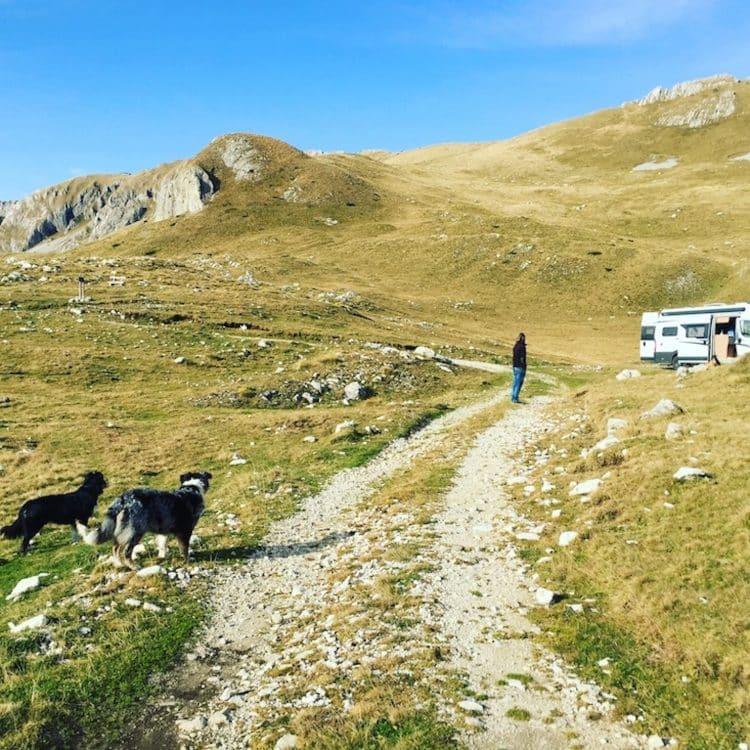 Montenegro Hund Camping Einreisebestimmungen