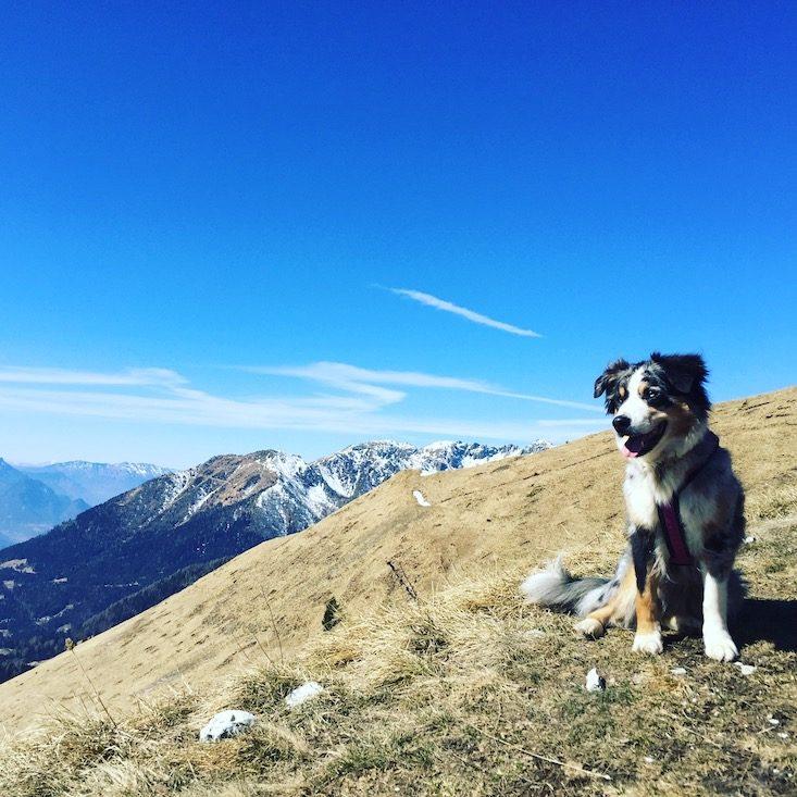 Passo Brocon Lagorai Trentino Wandern Hund Camping Wohnmobil