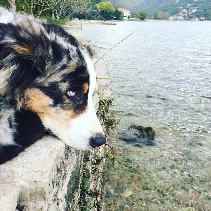 Montenegro Kotor Hund Wohnmobil Camping Campingbus Kontraste