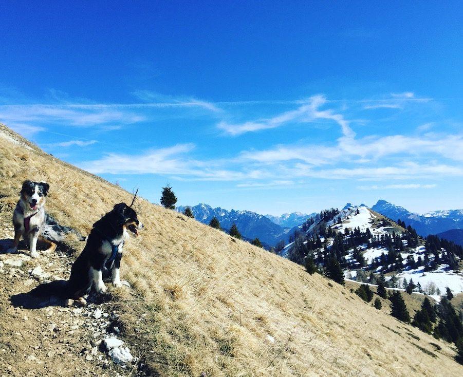 Passo Brocon Col della Boia Lagorai Trentino Camping Wohnmobil Hund Wandern