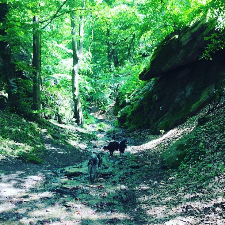 Wandern Wachau Hund