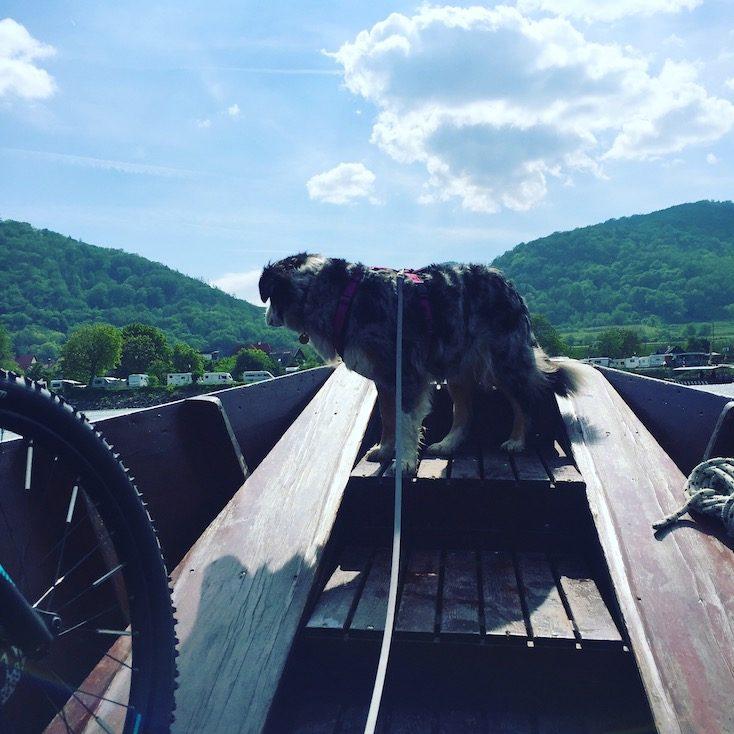 Donau Fähre Hund Dürnstein Rossatzbach