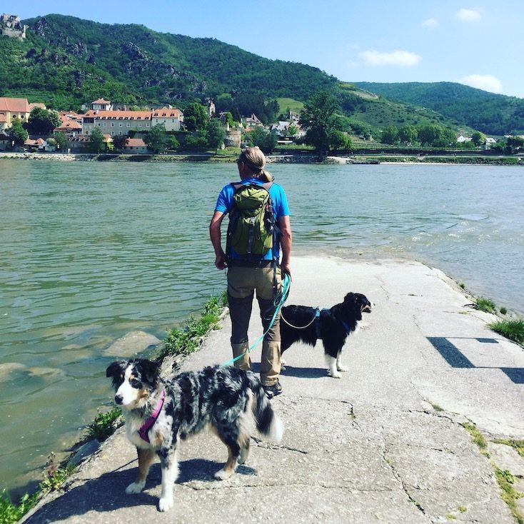 Donau Fähre Dürnstein Rossatzbach Camping Hund
