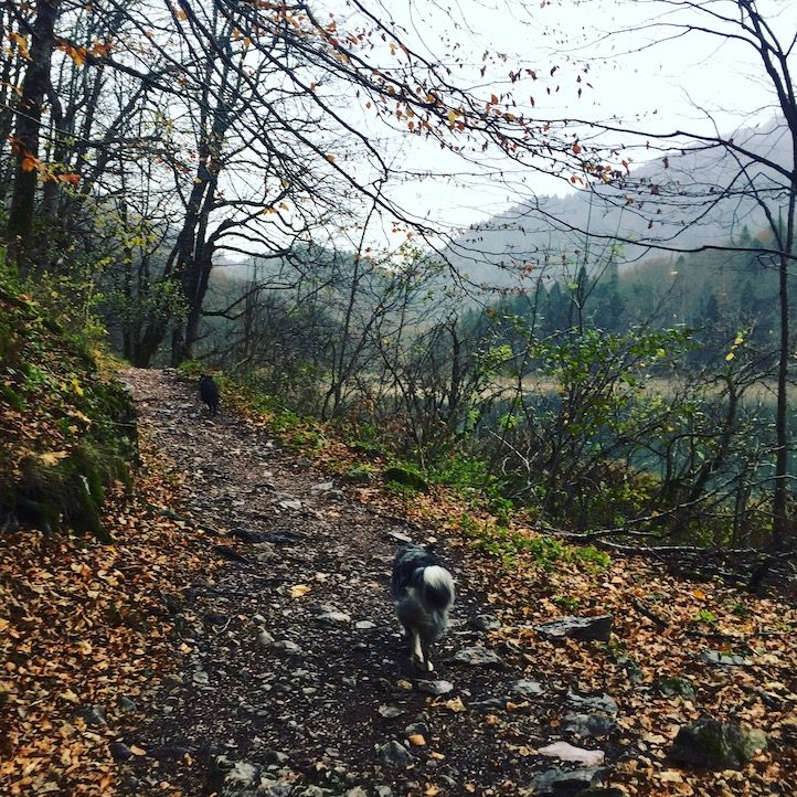 Biogradska Gora Rundwanderung Hund Montenegro