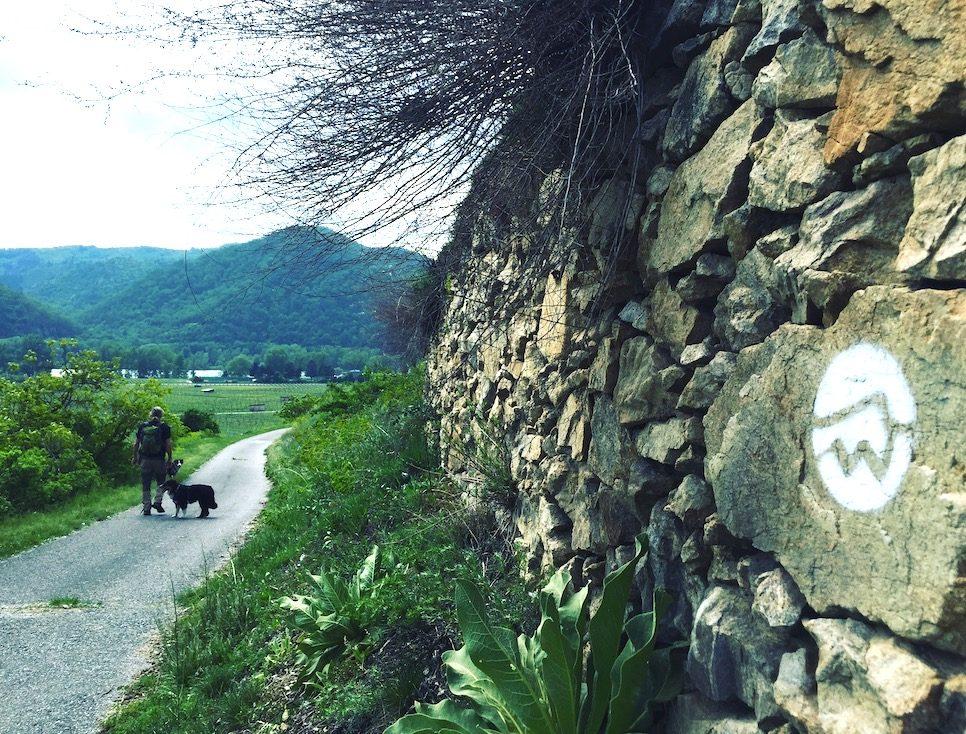Welterbesteig Niederösterreich wandern Wanderung Hund