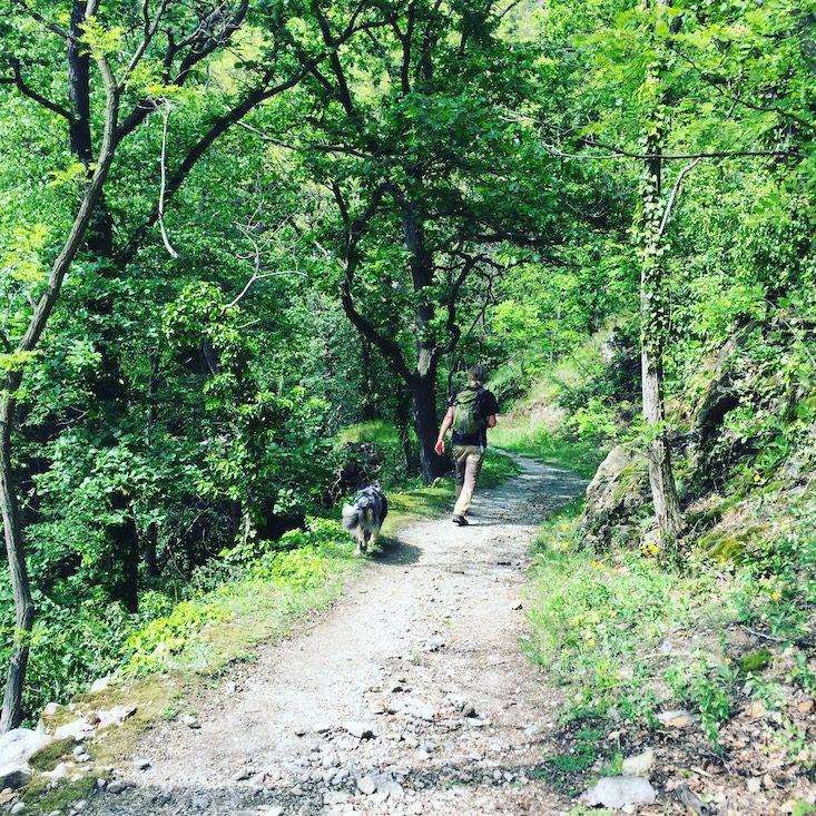 Wanderung wandern Hund Welterbesteig Camping Wachau
