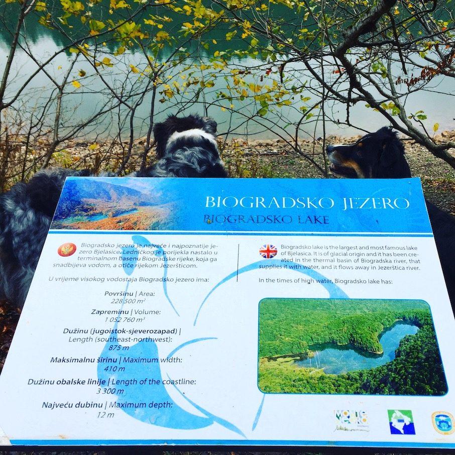 Biogradsko Jezero Biogradska Gora Rundwanderung Nationalpark Hund Camping