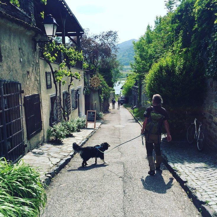 Dürnstein Hund Wanderung wandern Camping Wohnmobil