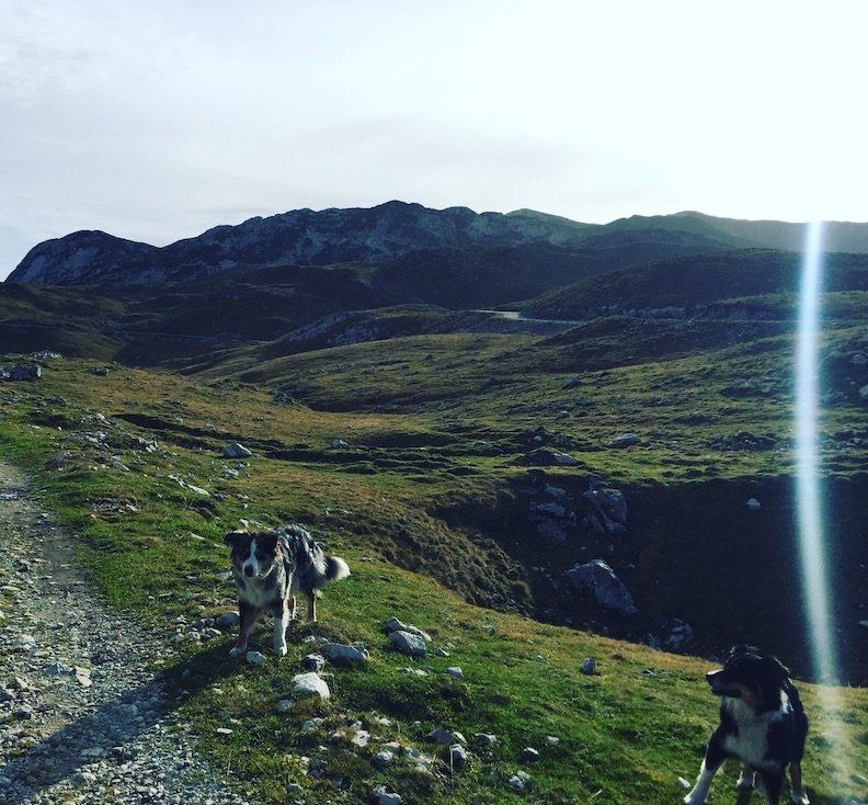 Durmitor Nationalpark Montenegro Camping Wohnmobil Hund