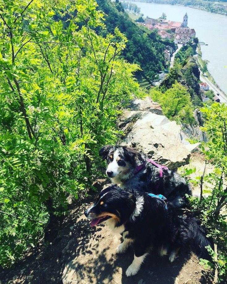 wandern Hund Dürnstein Camping Wohnmobil