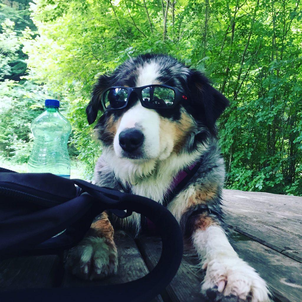 Soca Tal Hund Wandern