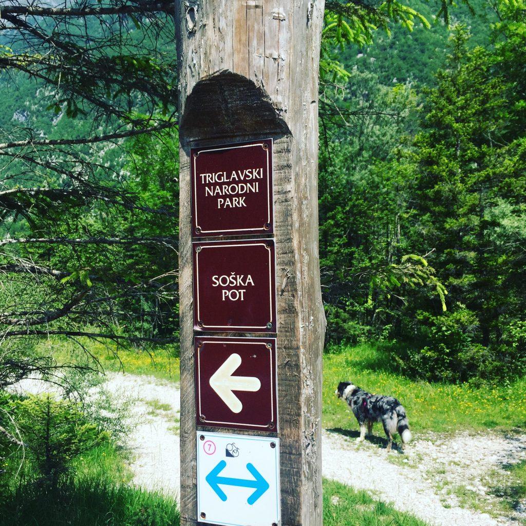Triglav Nationalpark wandern hund Slowenien soska pot