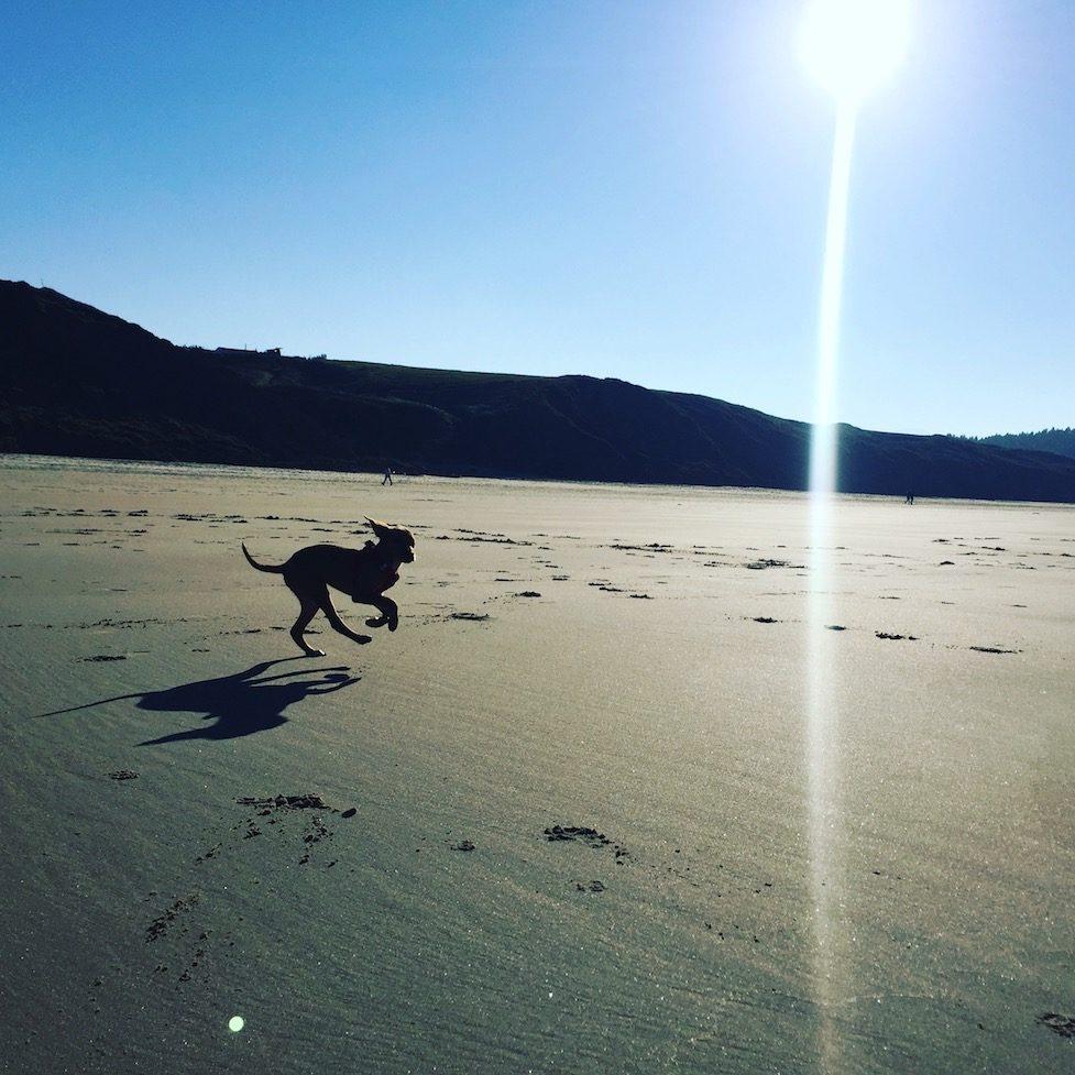 Hund camping Wohnmobil Sandstrand Nordspanien Asturien Kantabrien