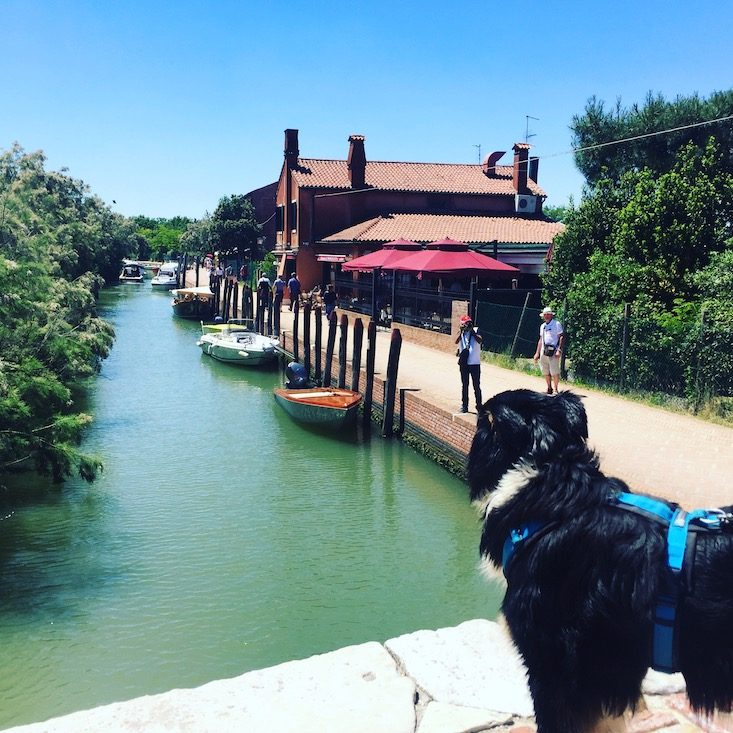 Torcello Laguneninsel Hund Venedig