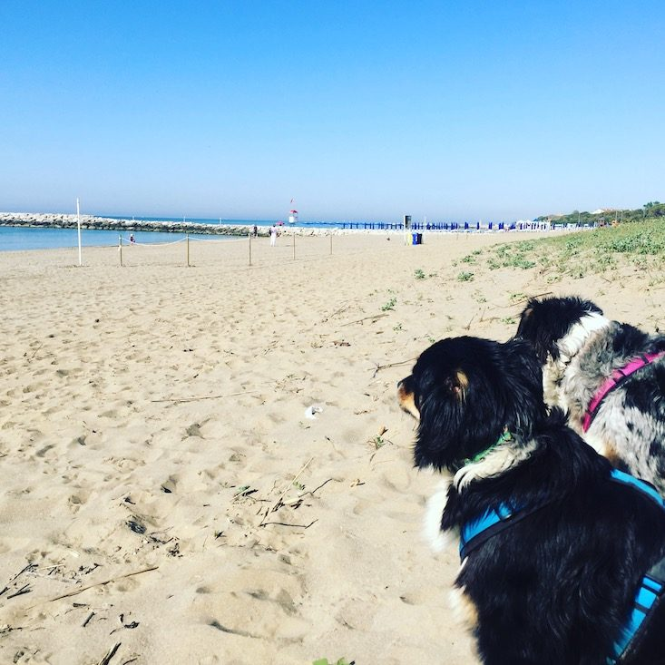 Cavallino Hundestrand Camping Hund Adria