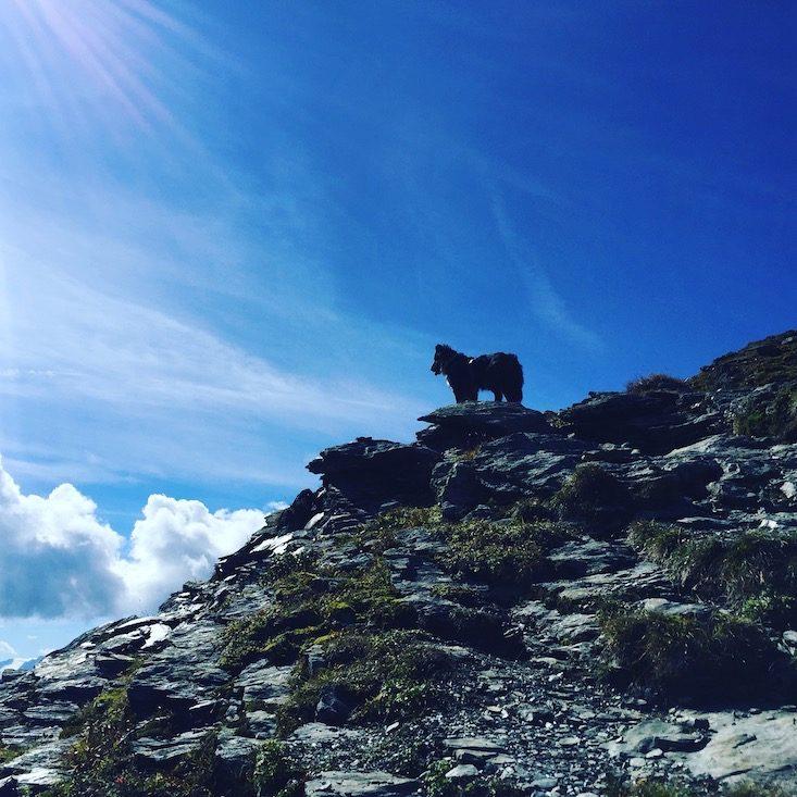 Gilfert Wandern Wanderung Hund Loas Kellerjoch