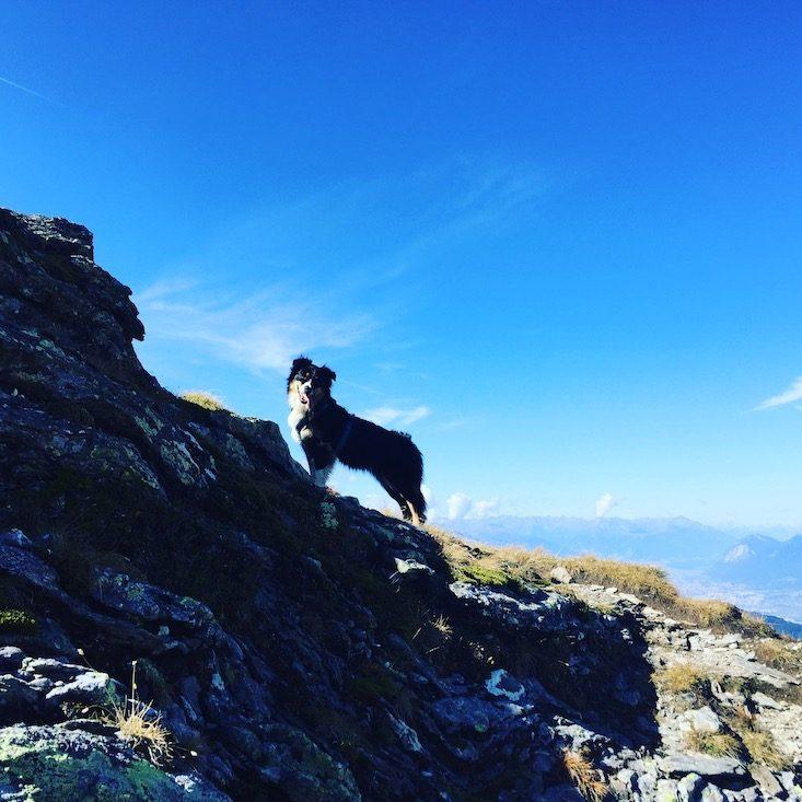 Loas Gilfert Hund wandern Wanderung Kellerjoch Inntal Tuxer Alpen