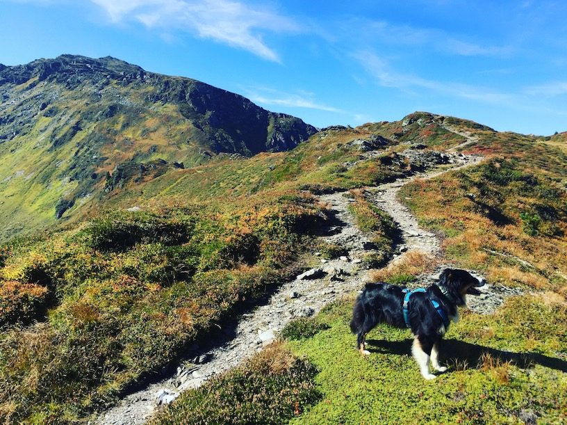 Gilfert wandern Wanderung Hund