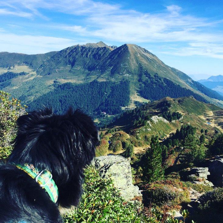 Gilfert Kellerjoch Wandern Wanderung Hund