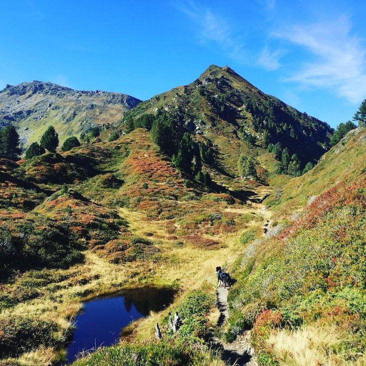 Wandern Wanderung Hund Gilfert Tuner Alpen Tirol Wildcamping Gilfert