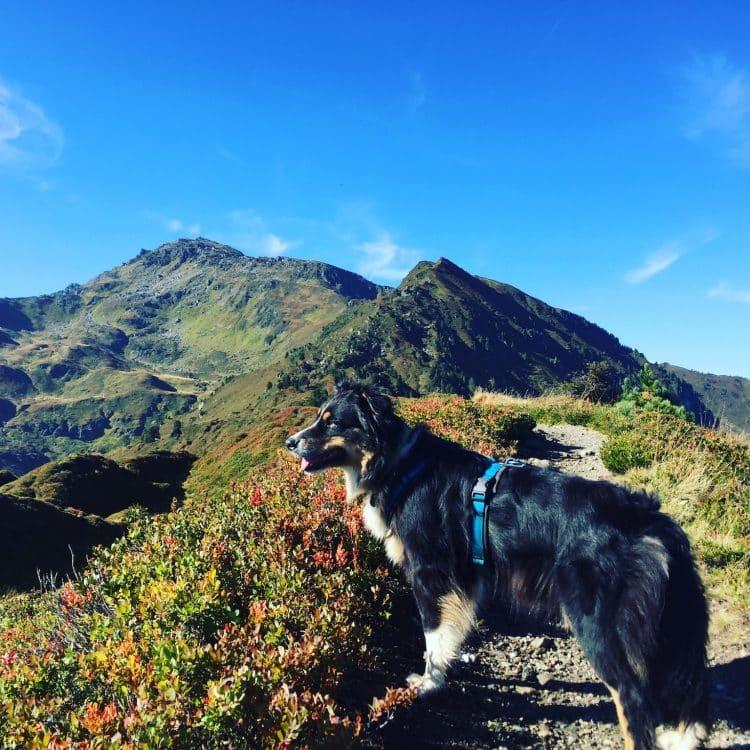 Alpen Wandern mit Hund