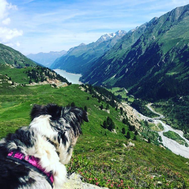 Kaunertal Hund Camping Wohnmobil Wandern