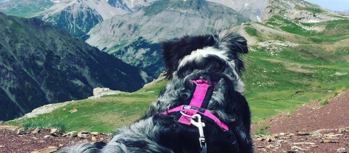 Alpen. Frankreich Camping Hund Wohnmobil Rundreise