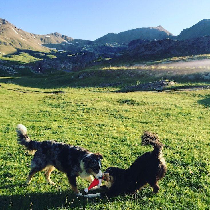 Col de la Bonette Hund camping ohne leine Australian Shepherd Wildcamping Vandog